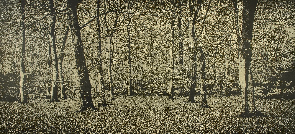 The Beech Wood I