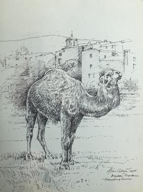 Provence-The Circus Camel