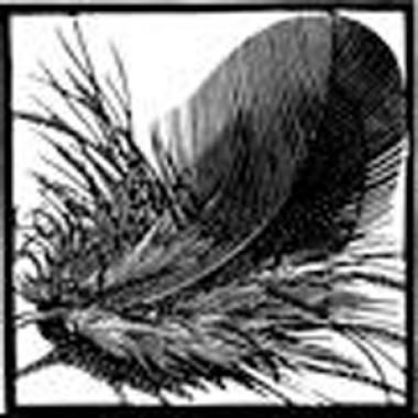 Chough Feather