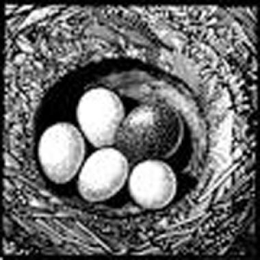 Cuckoo Egg