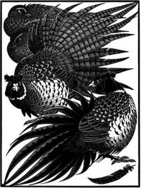 Nye of Pheasants II