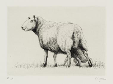 Sheep With Lamb II