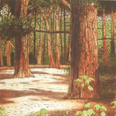 Sapling, Dolkey Hill Woodland