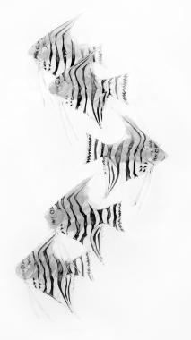 Zebra Angel Fish II