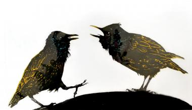 A Squabble of Starlings