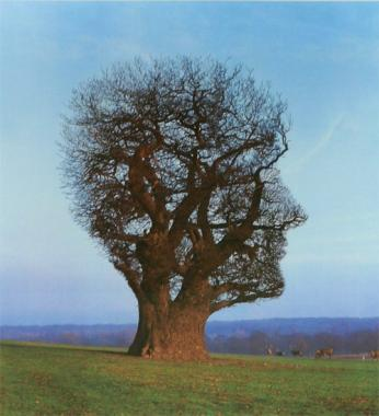 The Tree of Half Life