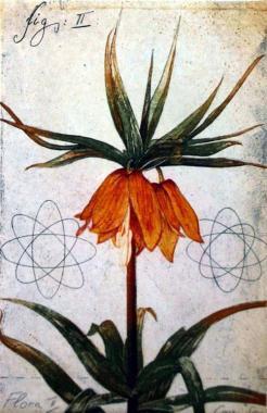 Flora ll
