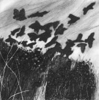 Jackdaws at Carrick Luz by Anita Reynolds