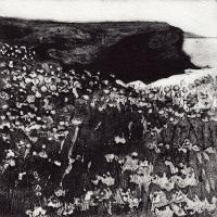 Day 15 Sky, Rock, Sea, Thrift (Gunver Head)  by Anita Reynolds