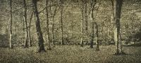 The Beech Wood I by Trevor Price RE