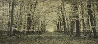 The Beech Wood II by Trevor Price RE