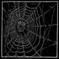 Spider Web by Colin See-Paynton
