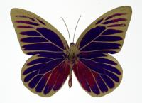 The Souls I - Imperial purple / fuchsia pink / cool gold by Damien Hirst