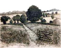 Field Gate by Francis Kelly