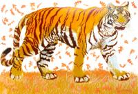 Tiger Tiger Fading Fast, from the Present to the Past by Julia Manning RE