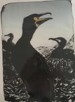 Cormorant by Louise Scammell