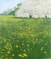 May by Phil Greenwood