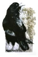 Raven With Oak Leaves by Sue Brown