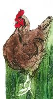 Rhode Island Red by Sue Brown