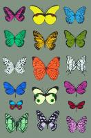 17 Butterflies by Scott Campbell