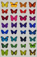 32 Butterflies by Scott Campbell