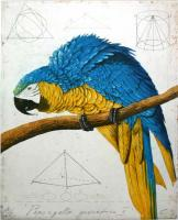 Papagallo Geometrico II by Wolfgang Zelmer